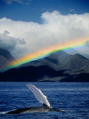 save whales dra martha castro tijuana california usa