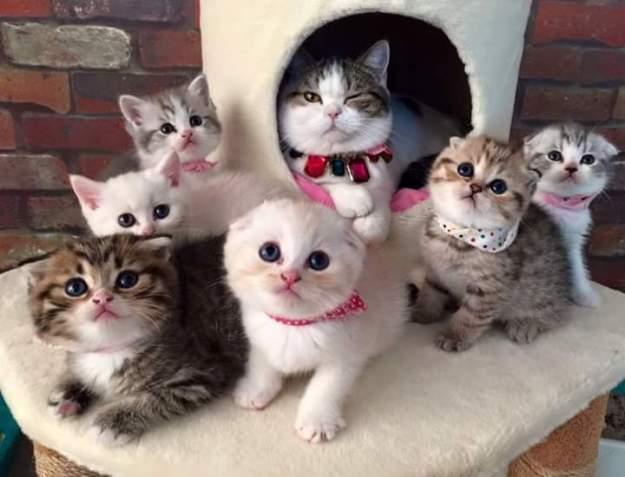 cats cute doctora martha castro tijuana baja california usa los angeles america states