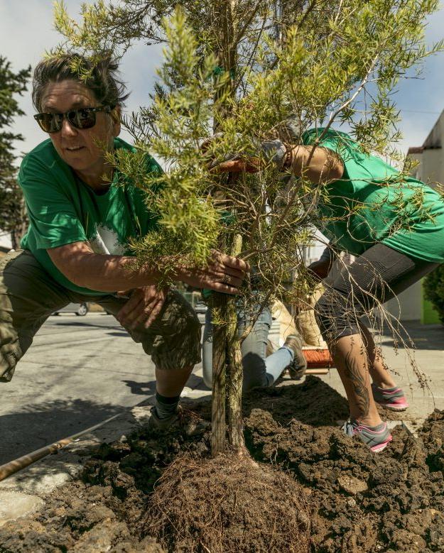 treeplanting-e1533503562903.jpg