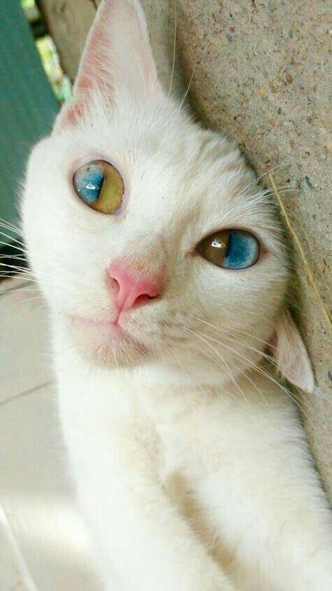 cats dra martha castro noriega tijuana mexico california america