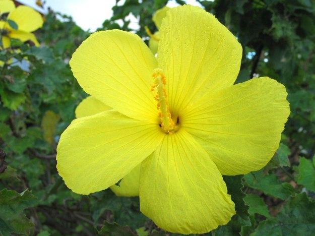 flowers nature dra martha castro noriega tijuana https://drmarthacastrodoctor.com/