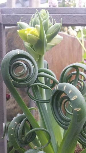 plant wonder beauty