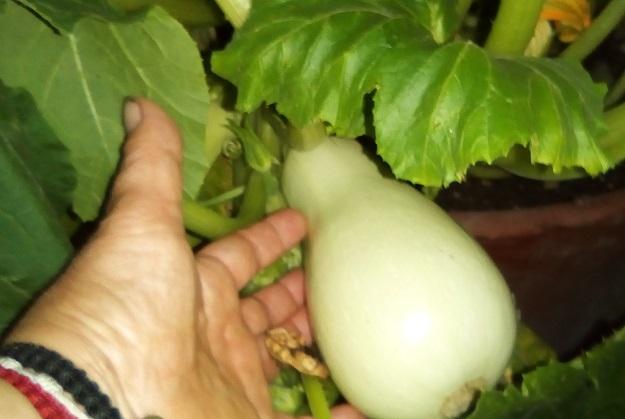 gardening dra martha castro noriega tijuana mexico