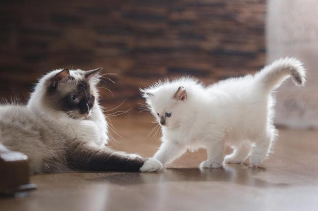 cat cats kitties kittens pets animals dra martha castro noriega mexico tijuana