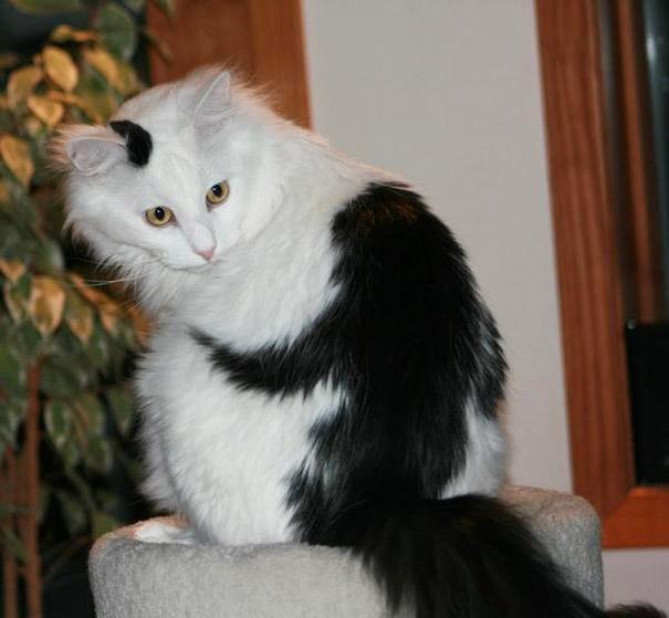 cats dra martha castro noriega tijuana