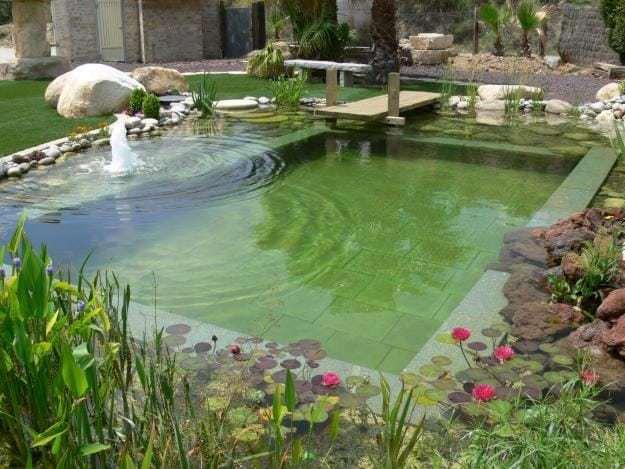 pools dra martha castro noriega tijuana mexico