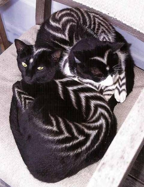 cats dra martha castro tijuana