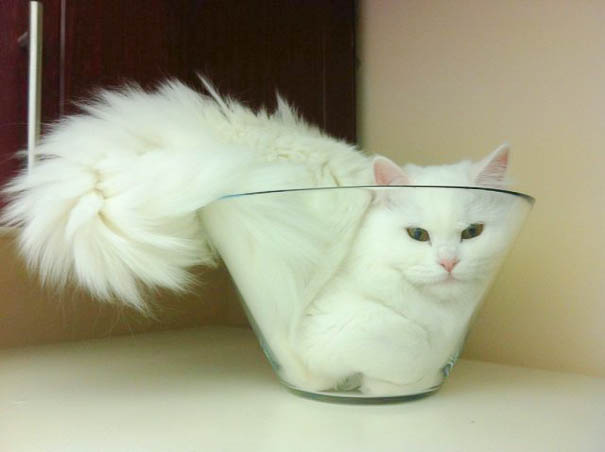 adorable cats dra martha castro tijuana baja california mexico los angeles america usa