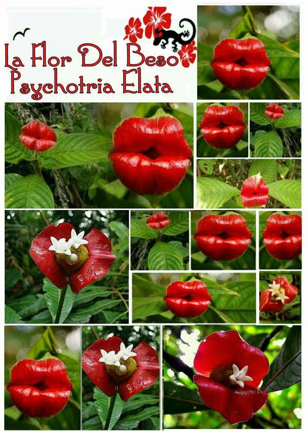 Alt Text (Alternative Text) kiss flower dra martha castro noriega tijuana baja california mexico usa los angeles