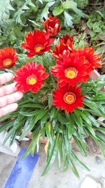 nature flowers dra martha castro tijuana mexico https://drmarthacastrodoctor.com/