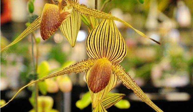 flowers nature dra martha castro noriega https://drmarthacastrodoctor.com/