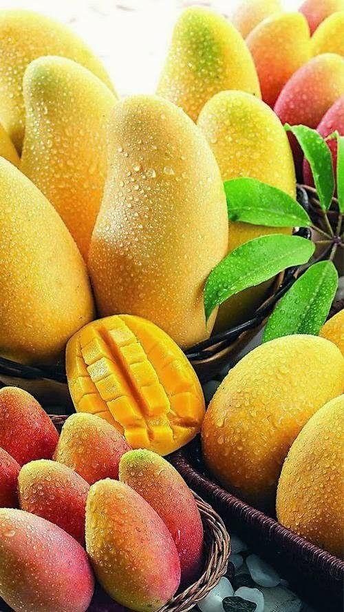 mango exotic food dr martha castro noriega mexico