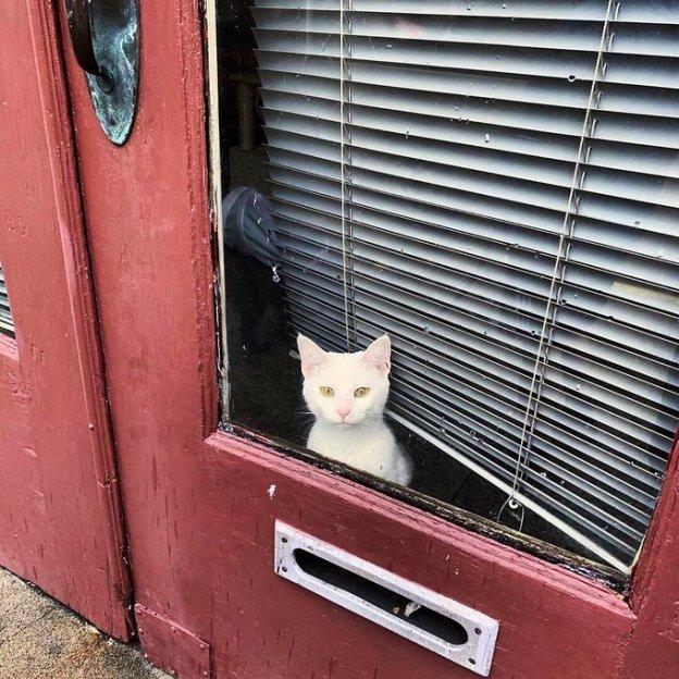 love cats pets dr martha castro mexico