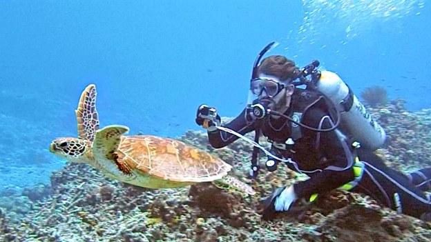 sea japan scuba diving sports nature dr martha castro noriega mexxico