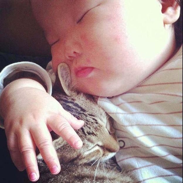 cats kitties sweet dr martha castro noriega mexico tijuana