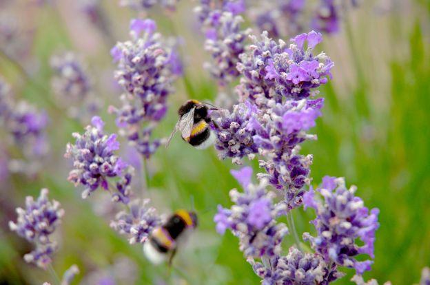 bees-dr-martha-castro-mexico