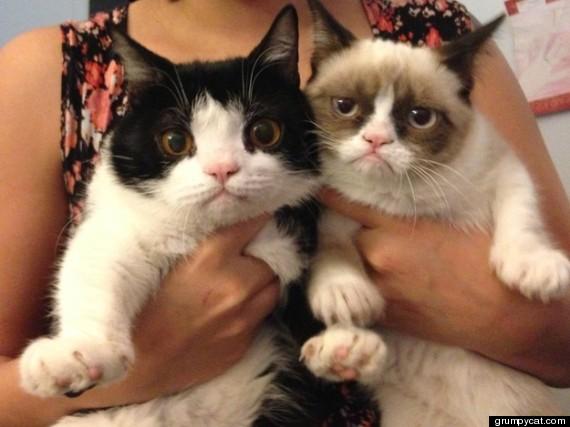 i love cats animals pets dr martha castro noriega mexico tijuana