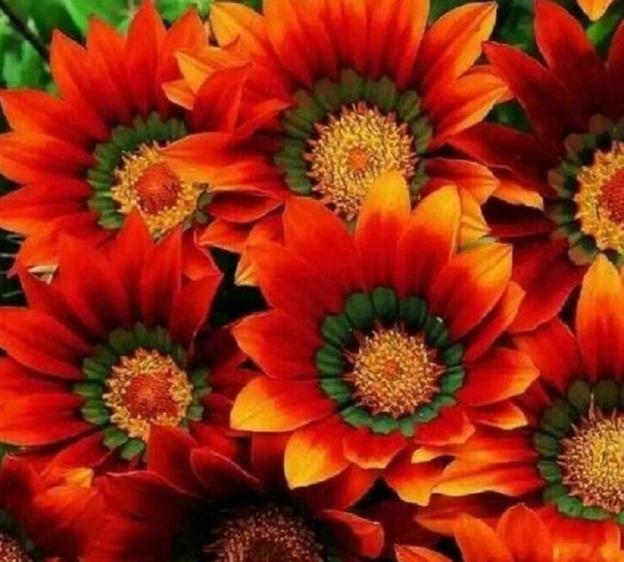 flowers nature dra martha castro noriega mexico