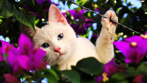 cats love pets sweet dra martha castro noriega tijuana mexico