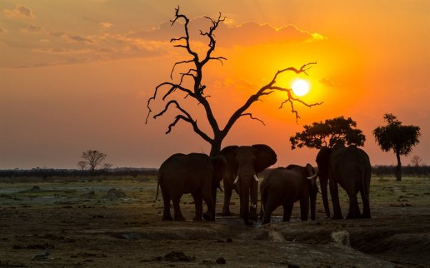 Africa wildlife life elephants travel dra martha castro noirega mexico
