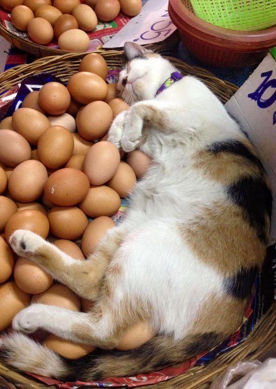 cats pets animals kitties dra martha castro noriega mexico california united states